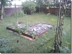 Hail in the Garden July 3 2012