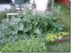Garden August 14 2012 (1)
