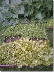 Garden August 14 2012 (2)