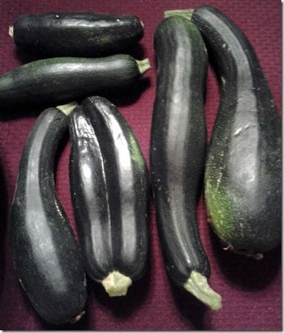Garden Harvest October 1 2012 (2)