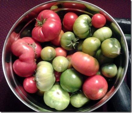 Garden Harvest October 1 2012 (3)