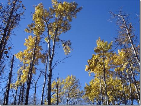 Glenbow Ranch Provincial Park October 17 2012 (36)