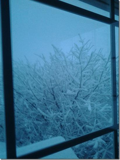 Snowy Trees November 22 2012 (1)