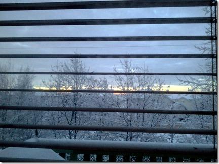 Snowy Trees November 22 2012 (3)