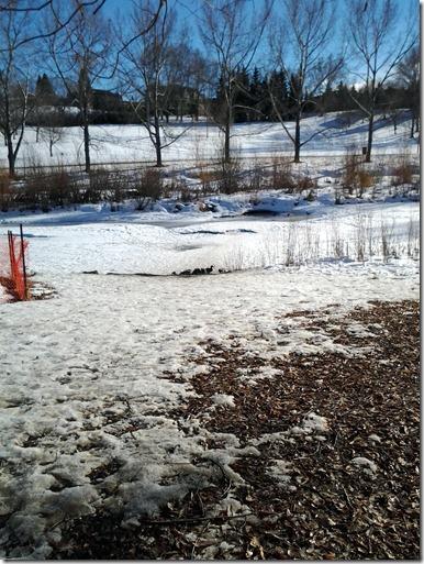 Confederation Park February 4 2013 (3)