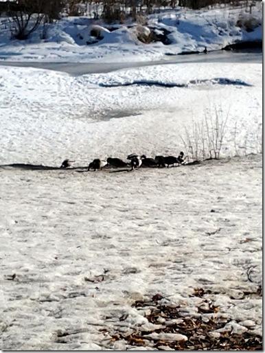 Confederation Park February 4 2013 (4)